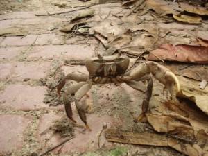 crab-on-boracay